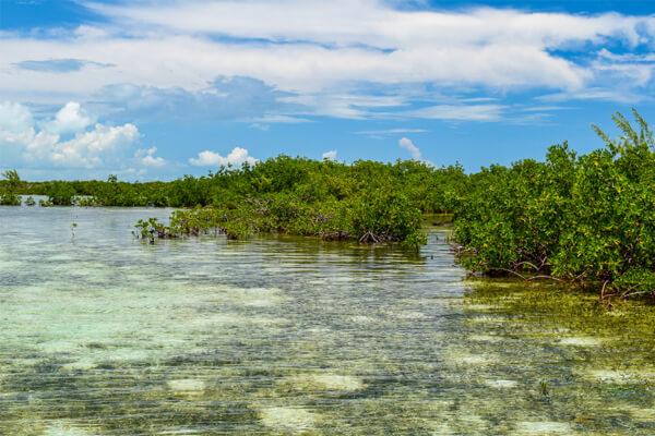 Mangroves in East Grand Bahama
